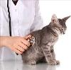 Ветеринарные клиники в Лахденпохье